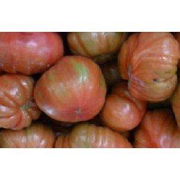 tomate feo de Tudela