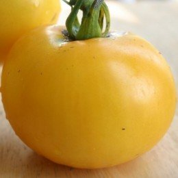 tomate golden queen (Semillas Ecológicas)