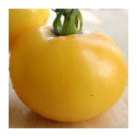tomate german gold (Semillas Ecológicas)