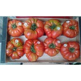 tomate rosa de Abanillas - plantel ecológico