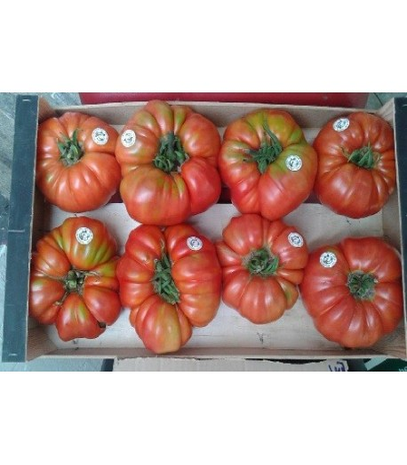 plantel ecologico de tomate feo de Tudela