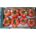 tomate rosa de Abanillas - plantel