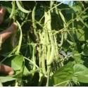 judia perona del Pep - semillas ecológicas