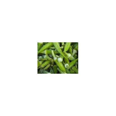 plantel de okra verde
