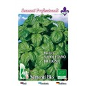 semillas ecologicas de albahaca hoja de lechuga