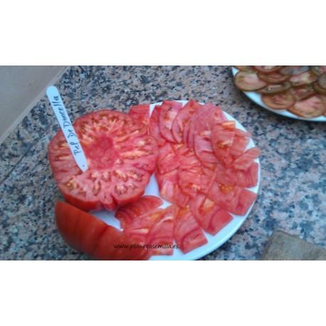 tomate rosa de Barbastro (semillas ecológicas) - www.planetasemilla.es