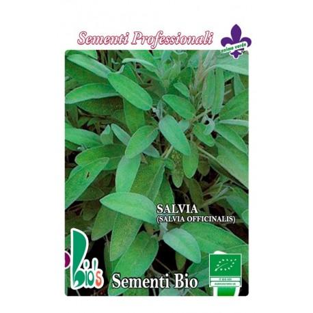 semillas ecológicas de salvia (salvia officinalis)