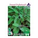 salvia (salvia officinalis) - semillas ecologicas
