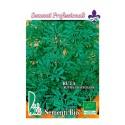 semillas ecológicas de ruda (rutha graveolens)