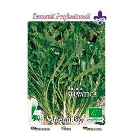 semillas ecologicas de rucula selvatica - planeta semilla