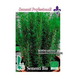 semillas ecológicas de romero (rosmarinus officinalis)