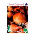 nazarenos - jacinto comoso (muscari comosum) semillas ecológicas
