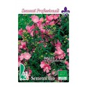 malva (malva silvestris) - semillas ecologicas