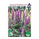 hisopo (hyssopus officinalis) - semillas ecologicas