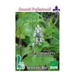 menta de gatos (nepeta cataria) - semillas ecologicas