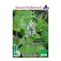 semillas de hierba de gatos (nepeta cataria)