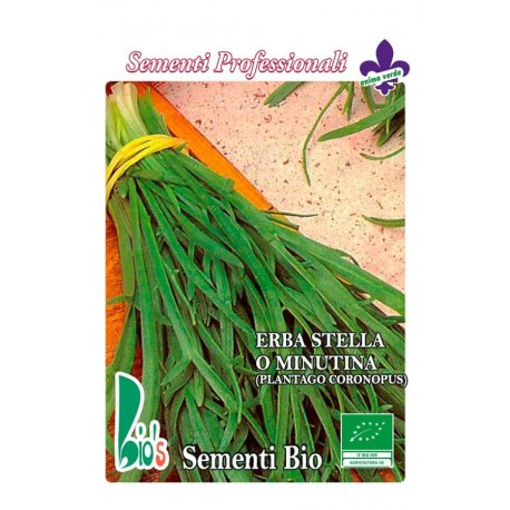 hierba estrella (plantago coronopus) - semillas ecologicas