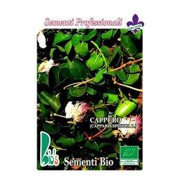 alcaparra (capparis spinosa) - semillas ecológicas