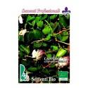 semillas ecológicas de alcaparra