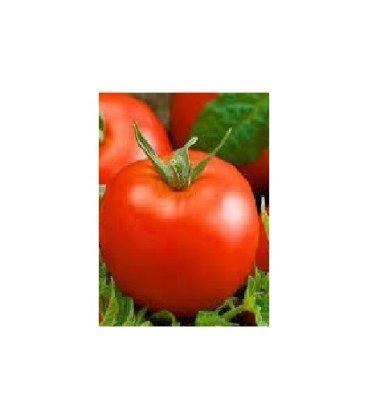 plantel de tomate tesalonica