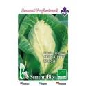 repollo corazón de buey - semillas ecológicas