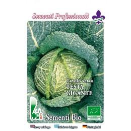 repollo cabeza gigante savoy precoz - semillas ecológicas