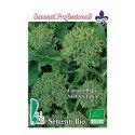 brocoli rapa novantino- semillas ecológicas