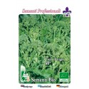 brocoli rapa quarantina - semillas ecologicas