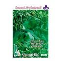 brocoli rapa rizado San Marzaro - grelos - semillas ecológicas
