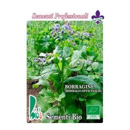 borraja (BORAGO OFFICINALIS) - semillas ecológicas