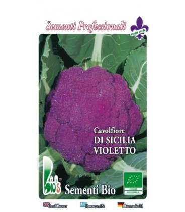 coliflor violeta de Sicilia - semillas ecologicas