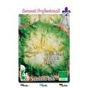 escarola verde de corazón lleno - semillas ecológicas