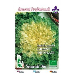 semillas ecologicas de escarola verde de corazón lleno