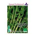 escarola cardoncella de Bari - semillas ecologicas