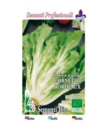 escarola corneta de Burdeos - semillas ecológicas