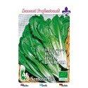 escarola lisa de Napoles - semillas ecológicas