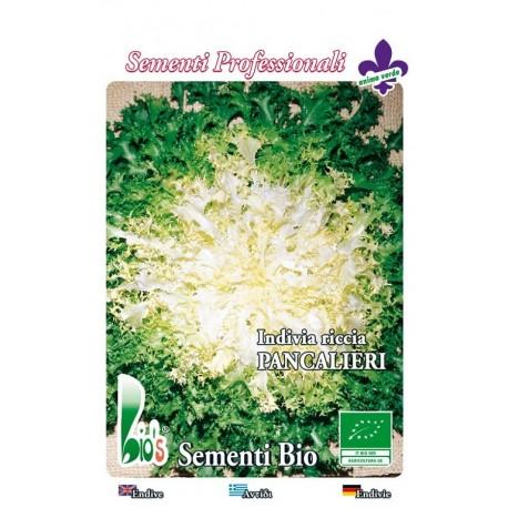 escarola rizada pancalieri - semillas ecológicas