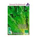 escarola rizada de tallo romanesca - semillas ecológicas