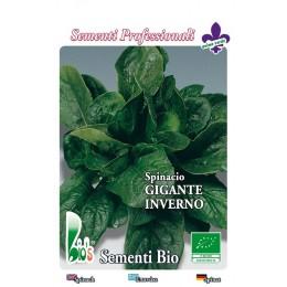 espinaca gigante de invierno - semillas ecológicas