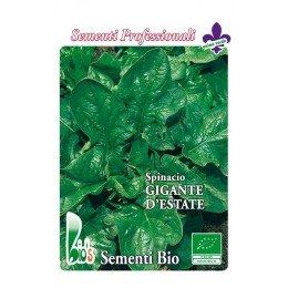 espinaca lorelay - semillas ecológicas