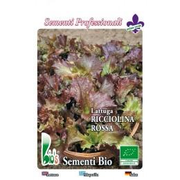 lechuga hoja de roble (red salad bolw) semillas ecológicas