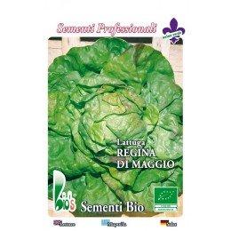 lechuga reina de mayo - semillas ecológicas