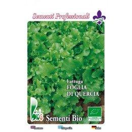 semillas ecologicas de lechuga hoja de roble verde - www.planetasemilla.es