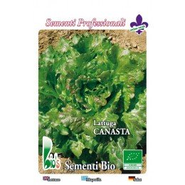 lechuga batavia canasta - semillas ecologicas