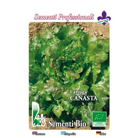lechuga canasta cuatro estaciones - semillas ecologicas