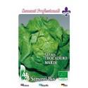 lechuga trocadero invernal - semillas ecológicas