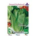 lechuga romana Valmaine - semillas ecologicas
