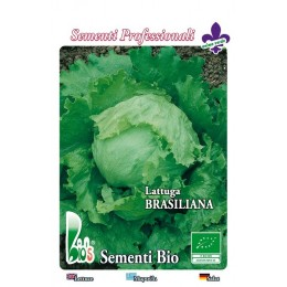lechuga brasiliana iceberg - semillas ecologicas