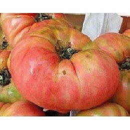 plantel ecológico de tomate rosa de Barbastro