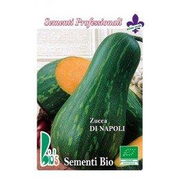 calabaza larga de napoles - semillas ecologicas